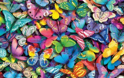 Nuevo proyecto: Red Mariposa
